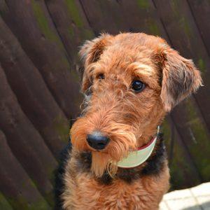 Toosje - unser Praxishund